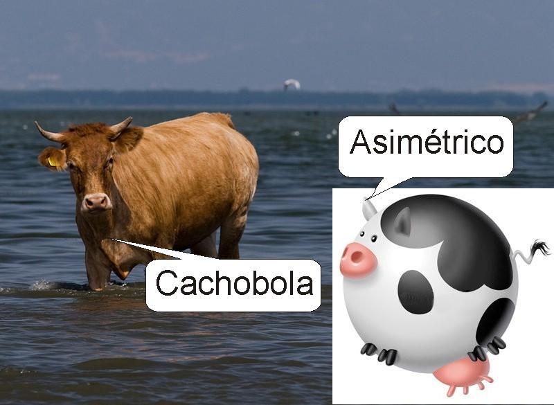 Vaca en agua